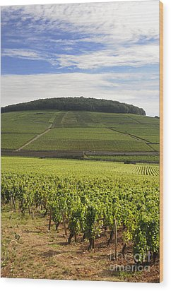 Grand Cru And Premier Cru Vineyards Of Aloxe Corton. Cote De Beaune. Burgundy. France. Europe. Wood Print by Bernard Jaubert