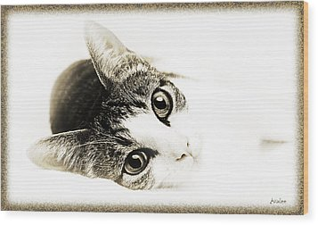 Grand Kitty Cuteness 3 High Key Wood Print by Andee Design