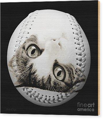 Grand Kitty Cuteness Baseball Square B W Wood Print by Andee Design