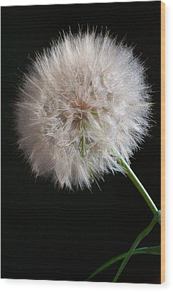 Wood Print featuring the photograph Grand Mountain Dandelion by Kevin Bone