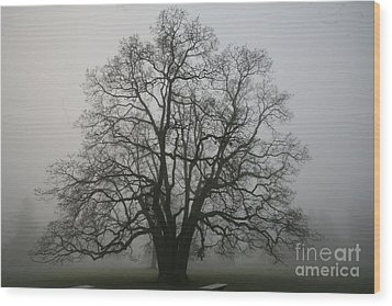 Grand Oak Tree Wood Print by Rich Collins