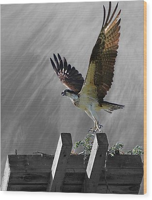 Grand Ole Osprey Wood Print by Davandra Cribbie