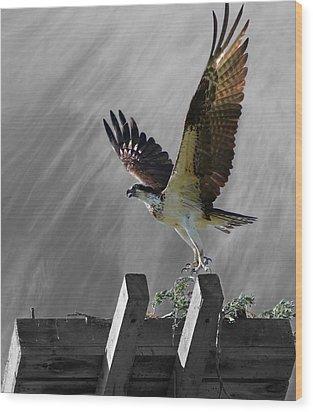 Grand Ole Osprey Wood Print