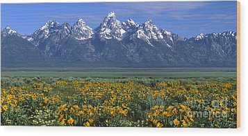 Grand Teton Summer Wood Print by Sandra Bronstein