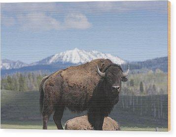 Grand Tetons Bison Wood Print by Charles Warren