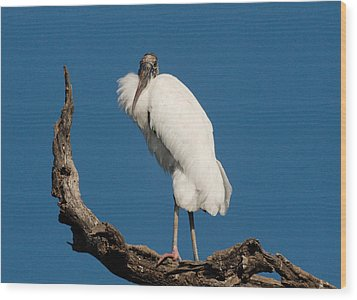 Grandfather Perched Wood Print by Linda Olsen