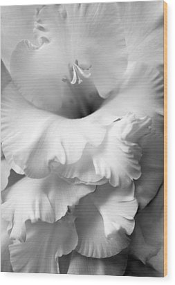 Grandiose Gladiola Flower Monochrome  Wood Print by Jennie Marie Schell