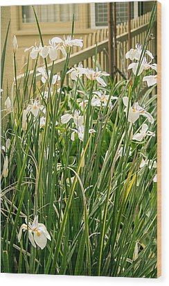 Grandpa's Lilies Wood Print by Jan Davies