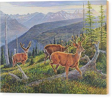 Granite Park Bucks Wood Print by Steve Spencer