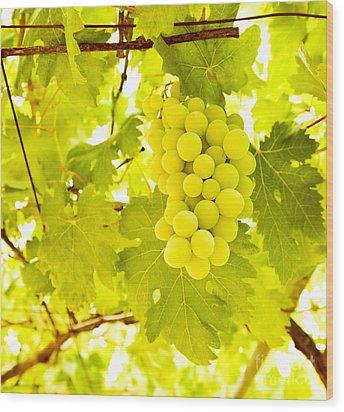 Grape Branch Wood Print by Anna Om