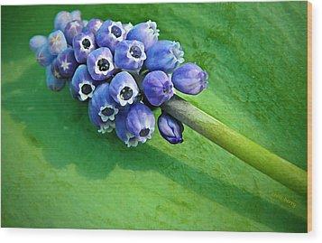Grape Hyacinth Spike  Wood Print by Chris Berry