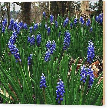 Grape Hyacinths Wood Print by Julie Dant