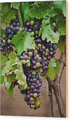 Grape Veraison Wood Print by Swift Family