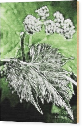 Grape Vine Leaf Wood Print by Odon Czintos