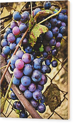Grape Vines Wood Print