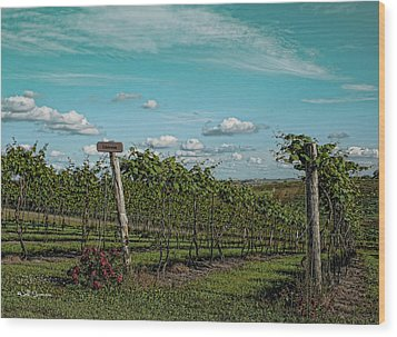Grape Vines Wood Print by Jeff Swanson