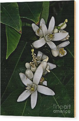 Wood Print featuring the photograph Grapefruit Blossoms by Ruth Jolly