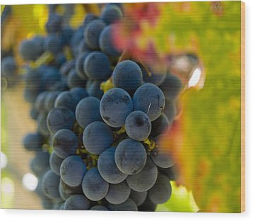 Grapes On The Vine Wood Print by Bill Gallagher