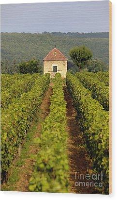 Grapevines. Premier Cru Vineyard Between Pernand Vergelesses And Savigny Les Beaune. Burgundy. Franc Wood Print by Bernard Jaubert
