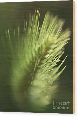 Wood Print featuring the photograph Grass 2 by Rebeka Dove