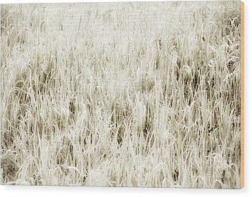 Grass Abstract Wood Print by Elena Elisseeva