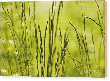 Grass Abstract Wood Print by Svetlana Sewell