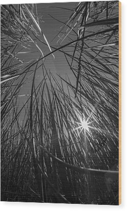 Grass Forest Wood Print by Luca Diana