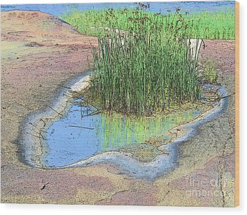 Grass Growing On Rocks Wood Print