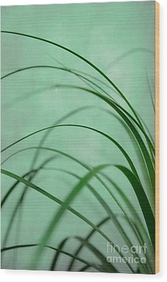 Grass Impression Wood Print by Hannes Cmarits