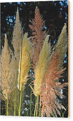 Grass In Color Wood Print by Michael Bruce