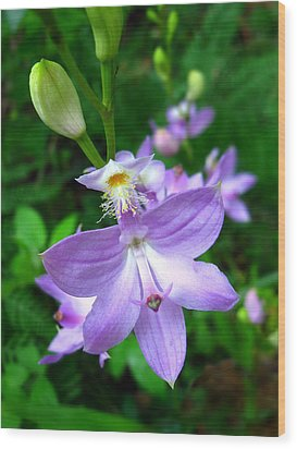 Wood Print featuring the photograph Grass Pink Orchid by William Tanneberger