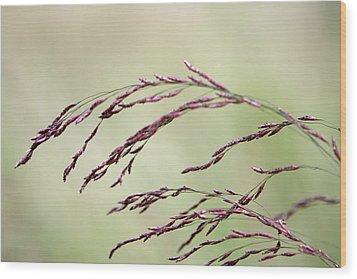 Grass Seed Wood Print
