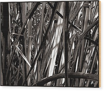 Grasses 2 Wood Print by Colleen Cannon