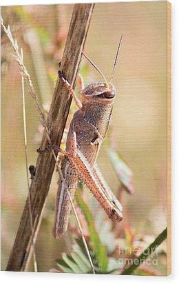 Grasshopper In The Marsh Wood Print
