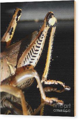 Grasshopper Legs Wood Print by Nola Hintzel