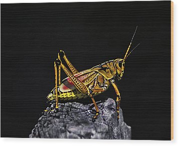 Grasshopper Portrait. Blue Cypress Lake Wood Print