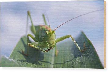 Grasshopper Wood Print by Tilen Hrovatic