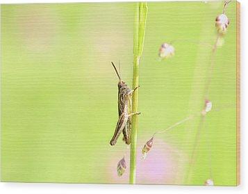 Grasshopper  Wood Print by Tommytechno Sweden