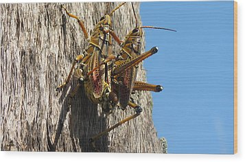 Grasshoppers Wood Print by Fortunate Findings Shirley Dickerson