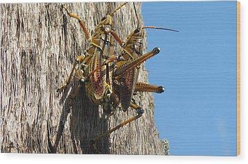 Grasshoppers Wood Print