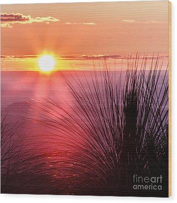 Grasstree Sunset Wood Print by Peta Thames