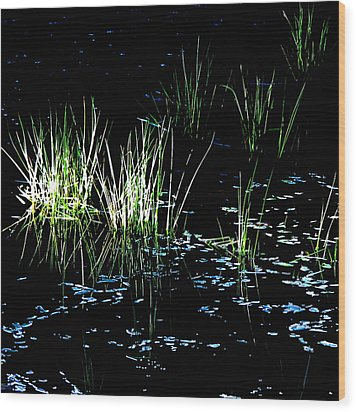 Wood Print featuring the photograph Grassy Lights by Suzy Piatt