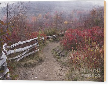 Graveyard Fields 1 - Blue Ridge Parkway 2013 Wood Print