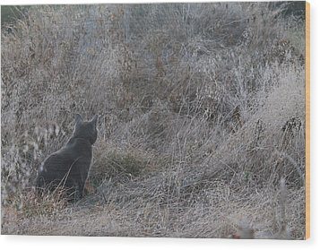 Wood Print featuring the photograph Gray Cat by Alicia Knust