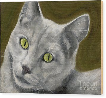Gray Cat With Green Eyes Wood Print by Amy Reges