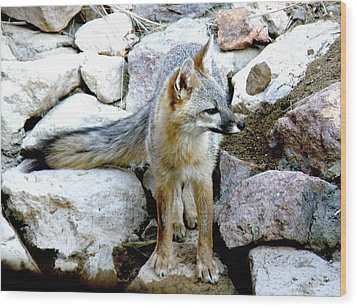 Gray Fox At The Oasis Wood Print by Feva  Fotos
