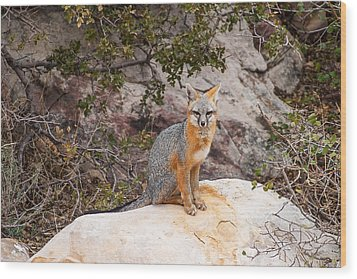 Gray Fox II Wood Print by James Marvin Phelps