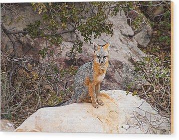 Gray Fox II Wood Print by James Marvin Phelps