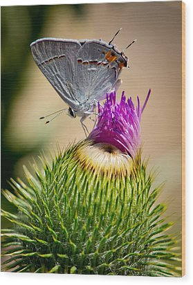 Wood Print featuring the photograph Gray Hairstreak On Thistle by Janis Knight