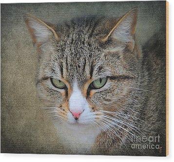 Gray Tabby Cat Wood Print by Jai Johnson